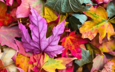 Four Ways to Deal with Autumn Anxiety